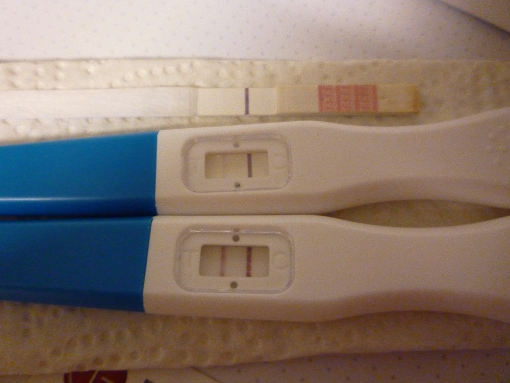 gravid dag for dag