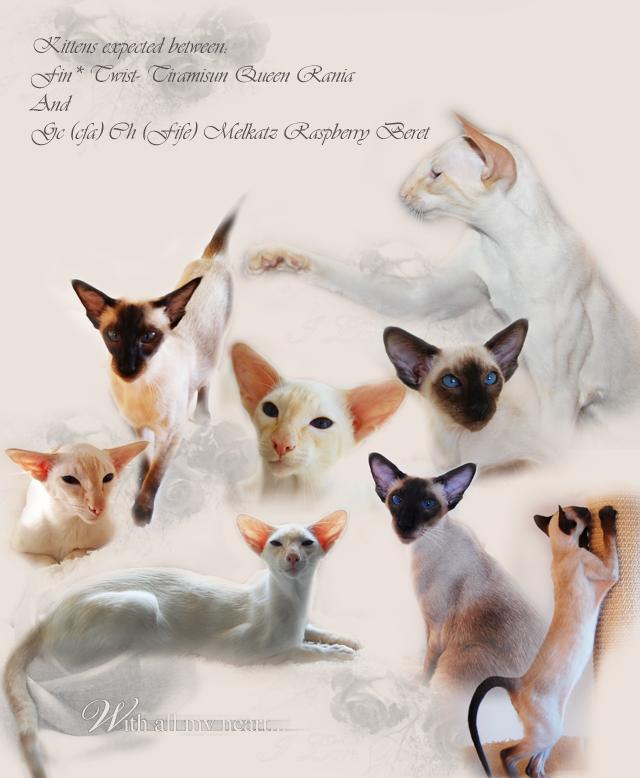 kittens.jpg (640×778)