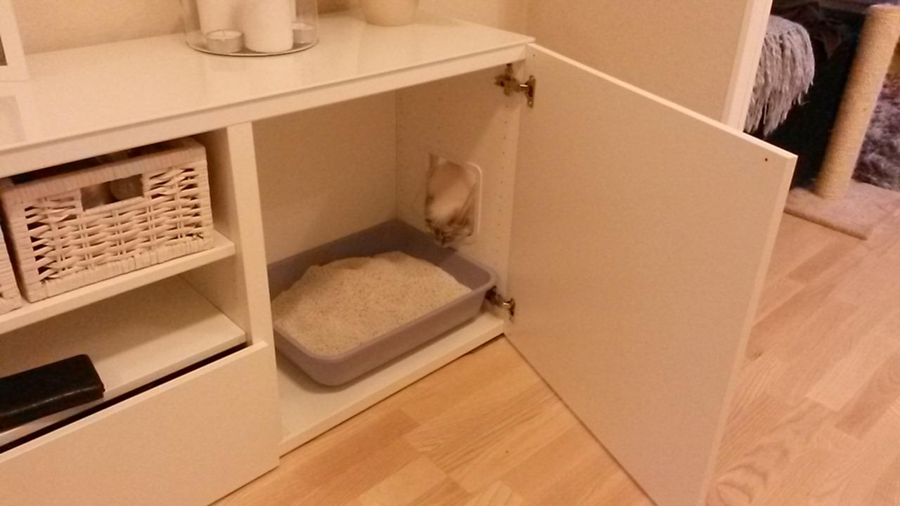 Smart kattlåda?   02. allmänt ragdollsnack   ragdoll ifokus