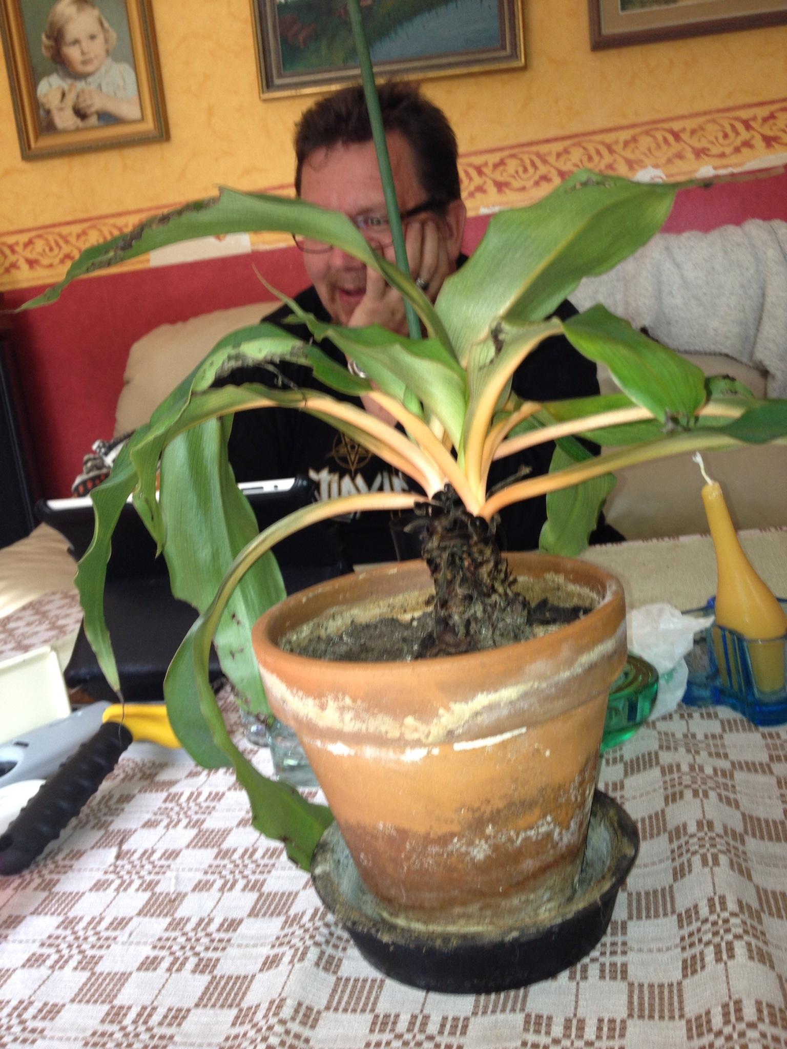 Vad är detta för växter   krukväxter, utomhus och inomhus ...