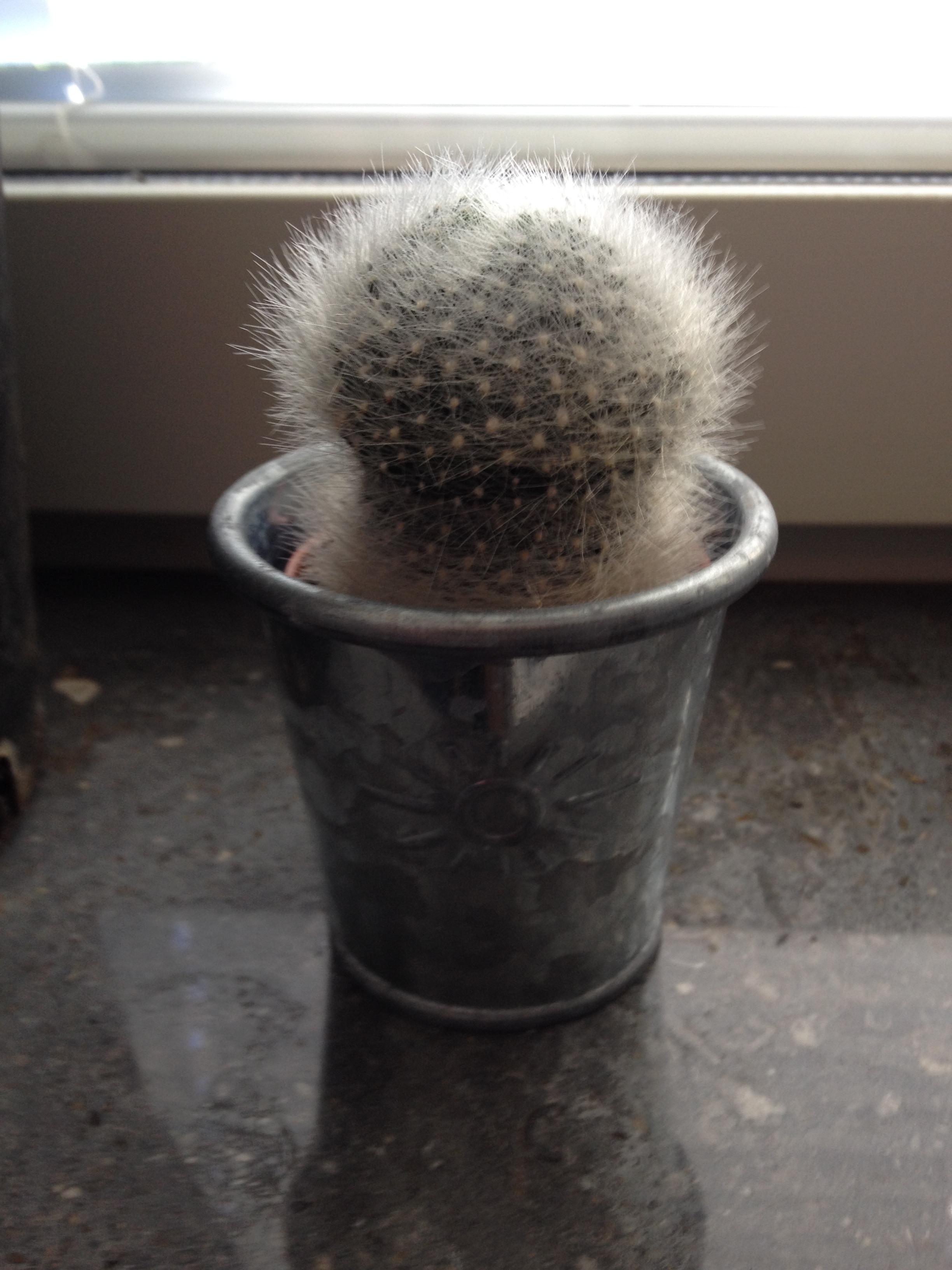 Bilder på era kaktusar - Krukväxter, utomhus och inomhus ...