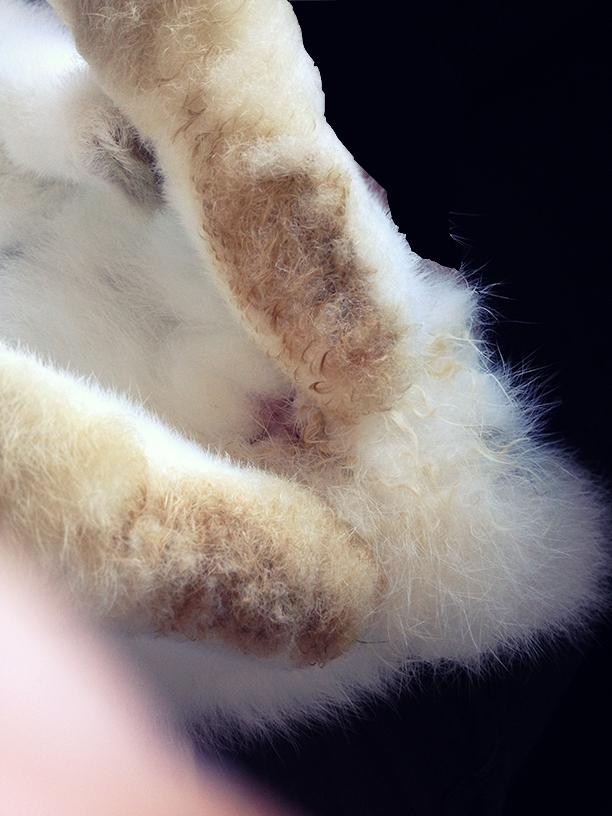antibiotika katt urinvägsinfektion