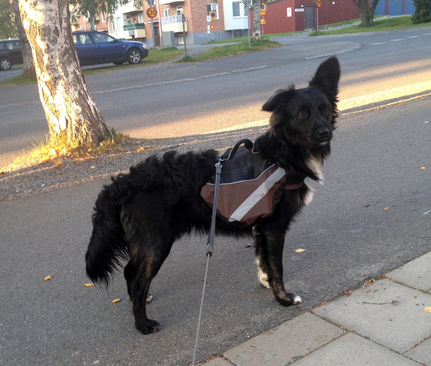 Frågor om klövjeväska Hundsport & Aktiviteter Hundar iFokus