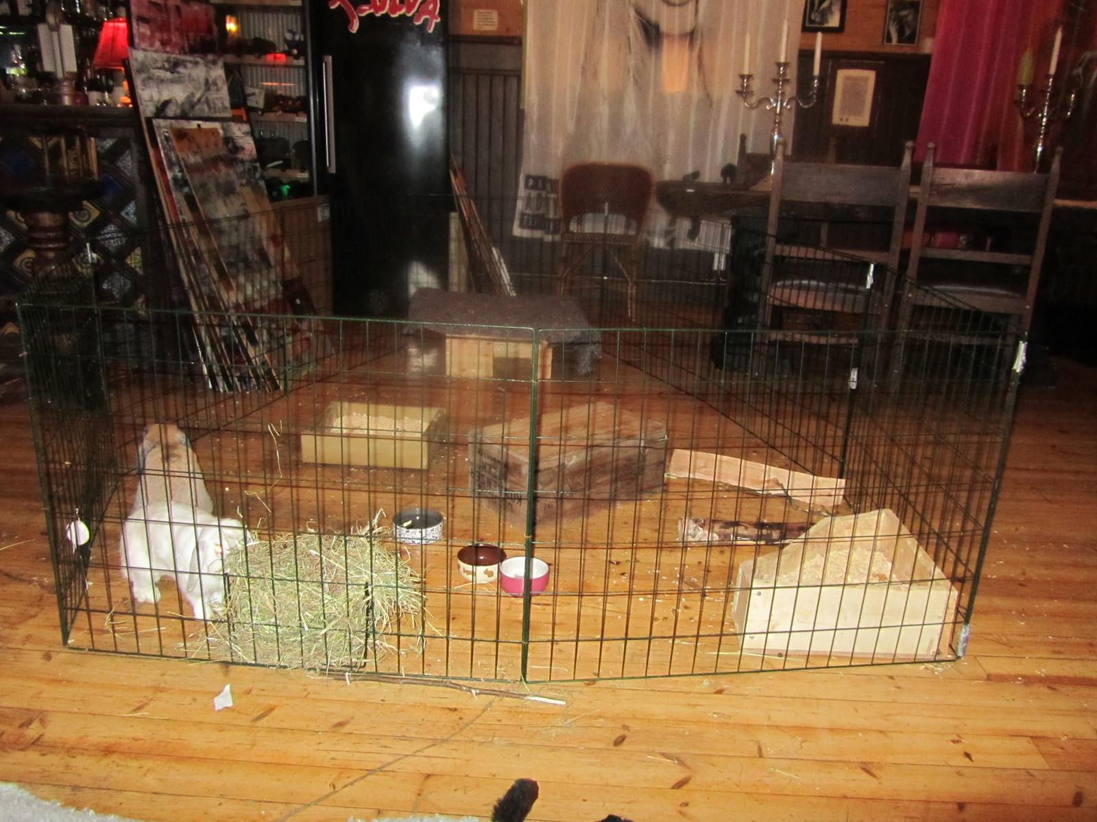 Hur stora burar har era kaniner?   bur och aktivering   kanin ifokus