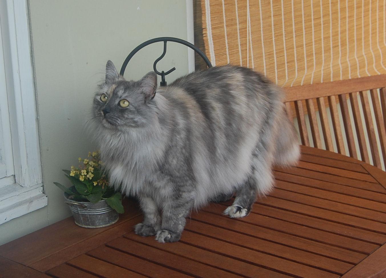 pälsvård katt tovor