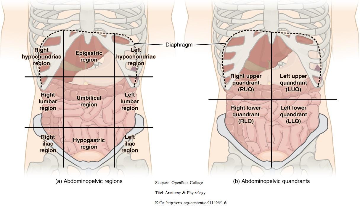 kramp i övre delen av magen