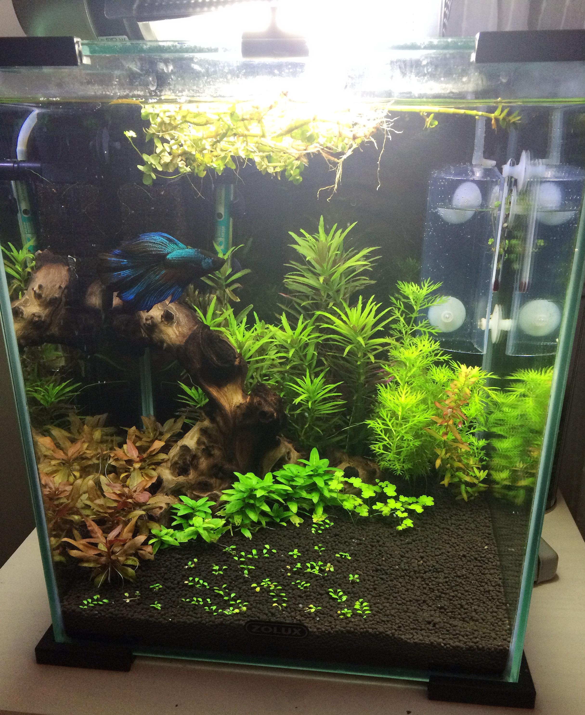 billiga akvarium hornbach